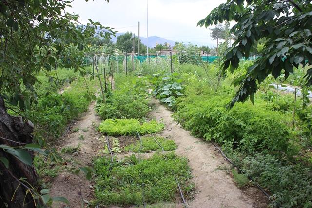 Hobi Bahçemiz ve Sosyal Etkinliklerimiz devam ediyor...