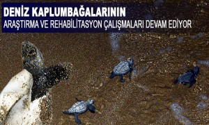 Deniz Kaplumbağalarının Araştırma Ve Rehabilitasyon Çalışmaları Devam Ediyor