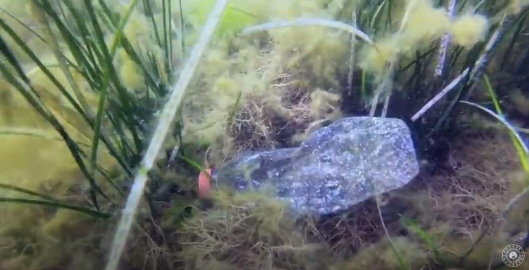 Deniz Çöpleri Eğitim Materyalleri
