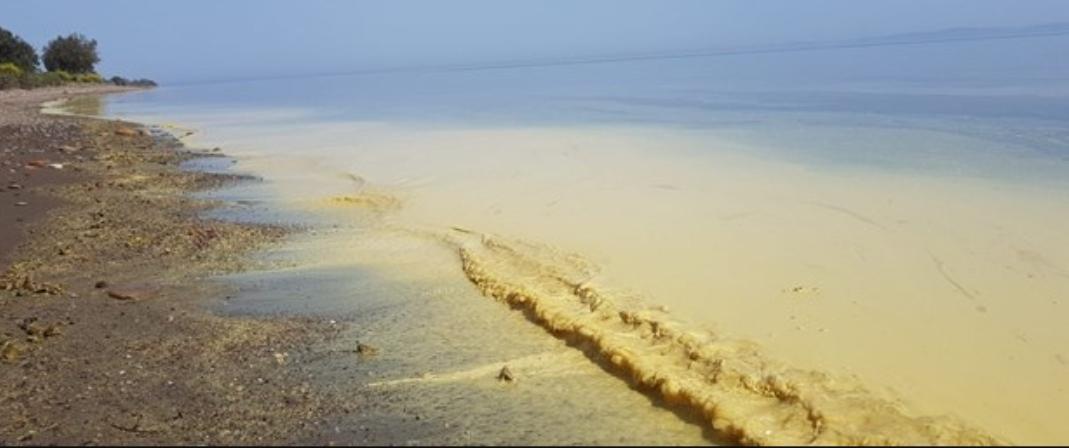 Çanakkale'nin Ayvacık İlçesi sahil kıyılarındaki renk değişimi hakkında Basın Duyurusu