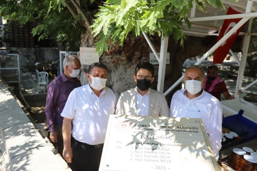 İlimiz Gülnar İlçesi Zeyne mahallesinde bulunan Bakanlığımız tarafından anıt ağaç olarak tescil edilen yaşları yaklaşık 200 ile 720 arasında değişen 4 adet çınar ağacı tanıtım tabelaları yerleştirildi.