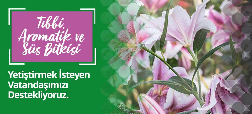 Tıbbi, aromatik ve süs bitkisi yetiştirmek isteyen vatandaşımızı destekliyoruz.