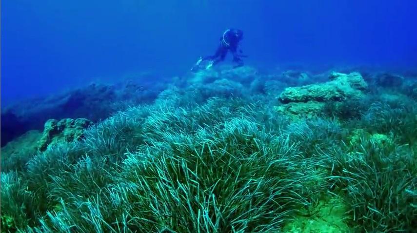 Deniz Çayırları Filmi