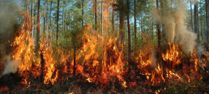 Orman yangınları ile mücadele kapsamında Uygulanacak Tetbirler