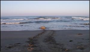 Göksu Deltası  ÖÇKB  Deniz Kaplumbağaları Koruma ve İzleme Projesi