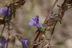 Kaş-Kekova Özel Çevre Koruma Bölgesi Biyolojik Çeşitlilik Araştırma Projesi