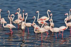 Tuz Gölü Ö.Ç.K Bölgesi Sulak Alanlarda Kuş Türlerini Koruma ve İzleme Projesi