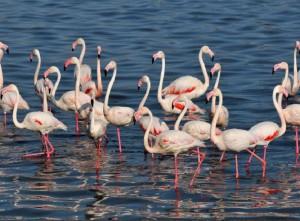 Tuz Gölü ÖÇKB'si Sulak Alanlarda Yaşayan Kuş Türlerini Koruma ve İzleme Projesi