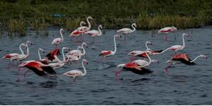 Tuz Gölü Özel Çevre Koruma Bölgesindeki Sulak Alanlarda Yaşayan Kuş Türlerini Koruma ve İzleme Projesi