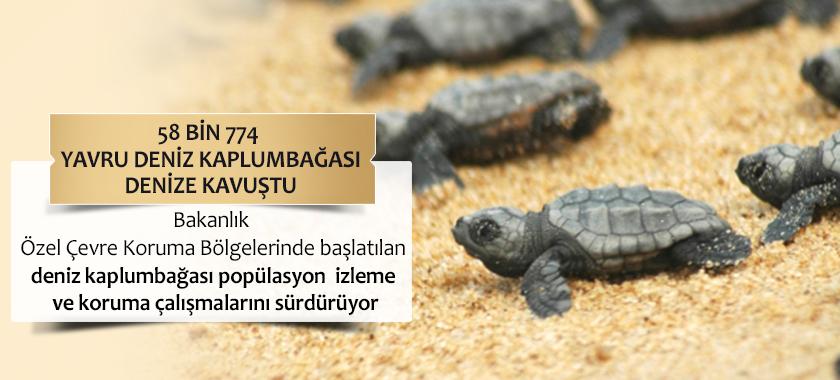 58 Bin 774 Yavru Deniz Kaplumbağası Denize Kavuştu