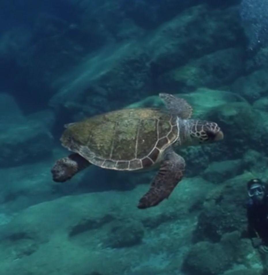 Deniz Kaplumbağaları
