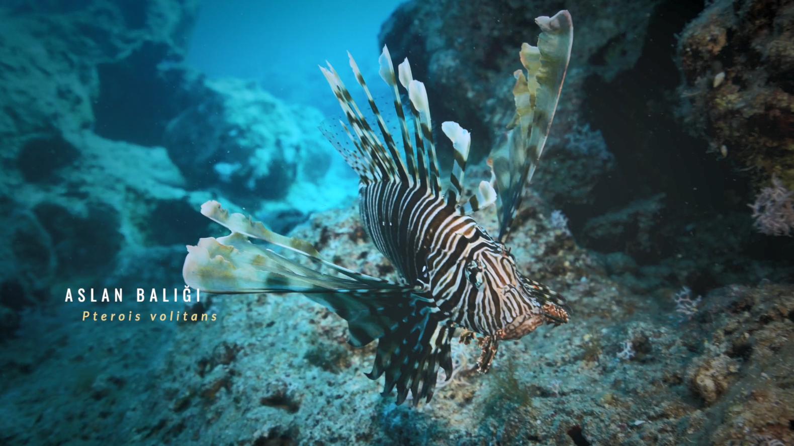 Küresel İklim Değişikliği ve Deniz Hayatı - İstilacı Türler
